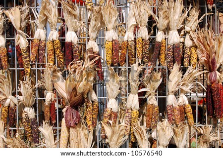 dried Indiana corn in market place