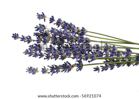 Dried lavender - stock photo
