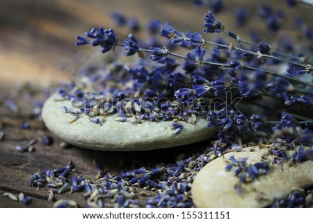 Dried Lavender - Stock Photo - blue flowers  - stock photo