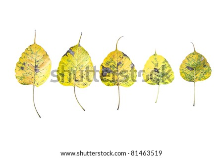 Dried Leaf isolated - stock photo
