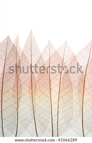 Dried Leaf skeleton background - stock photo