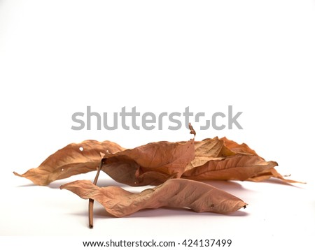 Dried leaf  , White background. (View with copy space)