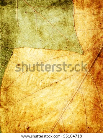 dried leaves grunge background - stock photo