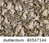 Dried leaves seamless background - texture pattern for continuous replicate. - stock photo