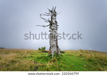 Dried lonely tree on a mountain slope at cloudy day - stock photo