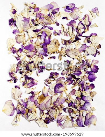 Dried old color petals background - stock photo