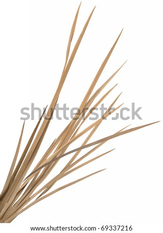 Dried ornamental grass clump. Very high-res. Clean edges, no shadows. - stock photo