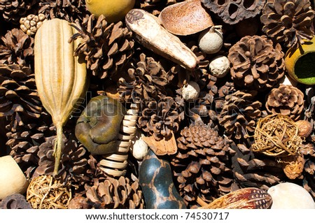 Dried pine cones and other ornamental decor assembled - stock photo