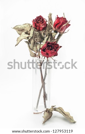 Dried Red roses on a white background. - stock photo