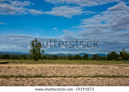 Dried Rice Field