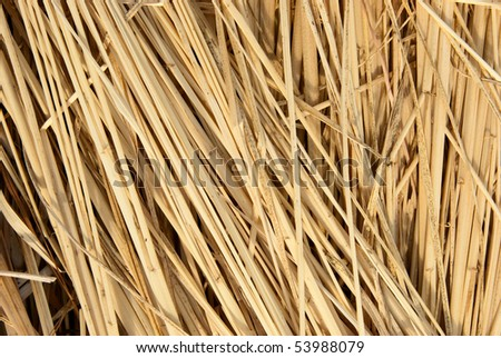 Dried rice straw placed in the same sequence. - stock photo