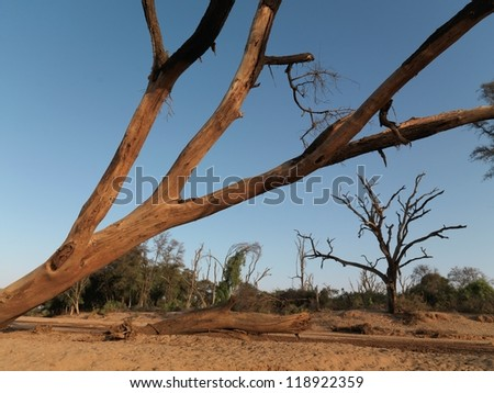 Dried riverbed in Kenya, Africa