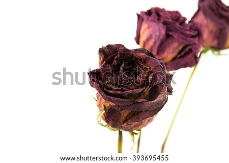 dried rose flower with dried leafs isolated / Dried red rose on white background