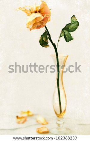 Dried rose in an antique crystal bud vase.  Vintage aged textured background with selective focus on the petals.  Room for copy - stock photo