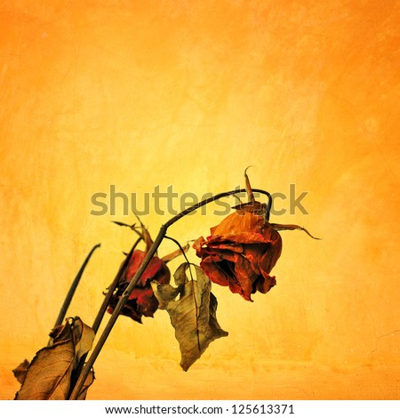 Dried rose in grunge style, Concept of Sad Valentine day - stock photo