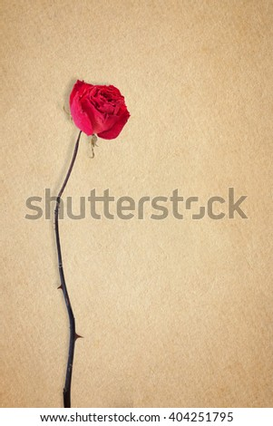 Dried rose on brown paper  - stock photo