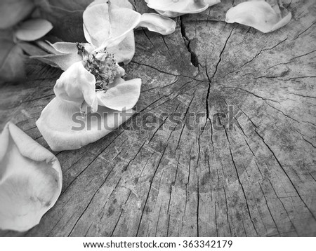 Dried roses and petals on rustic wooden background in black and white tone - stock photo