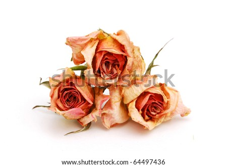 Dried roses stacking on white - stock photo