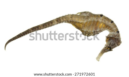 Dried sea-horse isolated on white background - stock photo