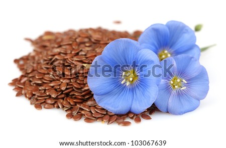 Dried seeds of flax with flowers - stock photo