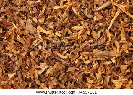 dried smoking tobacco leaves close-up macro view - stock photo
