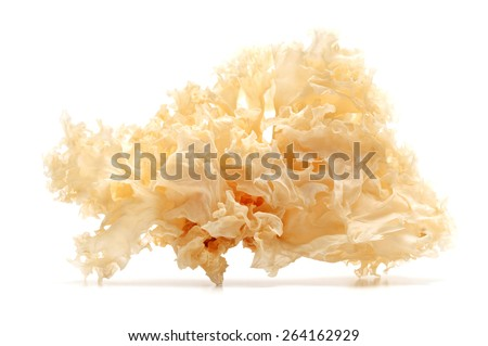 Dried snow fungus on a white background - stock photo
