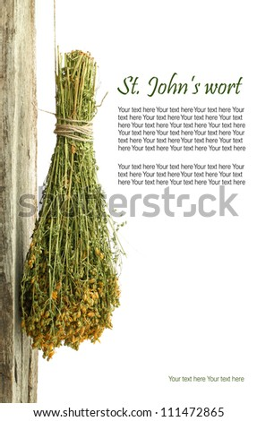Dried St. John's wort plant hanging from a rope with copy space - stock photo