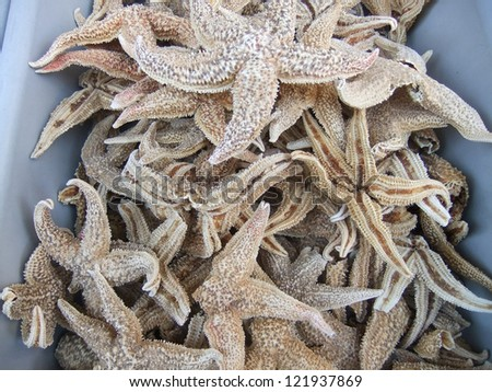 Dried starfish used in traditional Chinese medicine - stock photo
