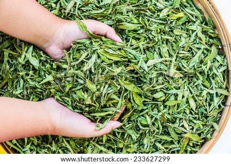 Dried Stevia Rebaudiana Bertoni - Natural sweetener leaf sugar  - stock photo