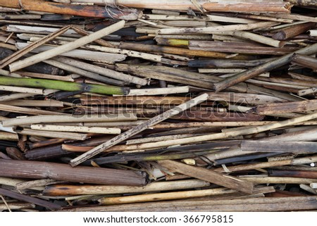 Dried sticks .