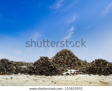 Dried tea leaves against the blue clear sky