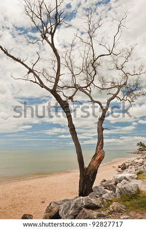 dried tree beside the sea Thailand.