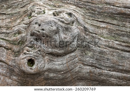 Dried tree trunk with nuts - background - stock photo