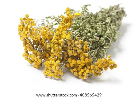 Dried twigs of a herb Tansy - Tanacetum Vulgare or Common Tansy, also Bitter Buttons, isolated on white background. - stock photo