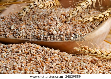dried wheat against