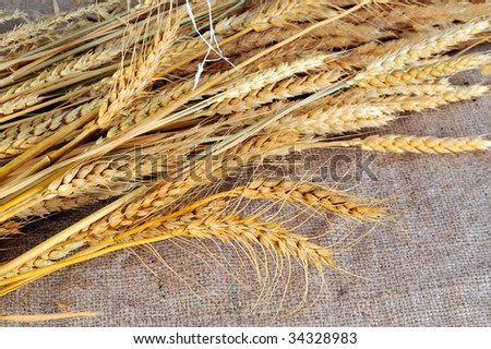 dried wheat against burlap background