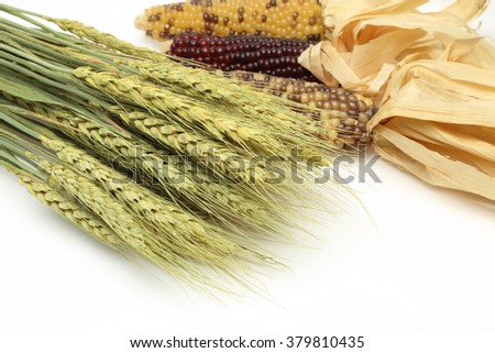 Dried wheat and corn