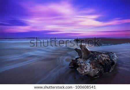 Drift wood at sunset on sandy beach - stock photo
