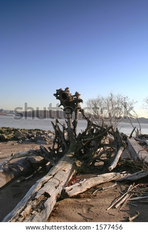 Drifted wood on the Hudson river shore of New Jersey