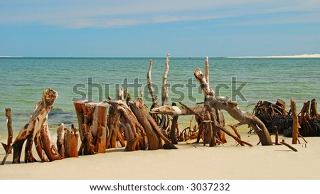 Driftwood and Stumps at Seashore