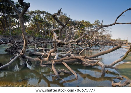 Driftwood and washed out trees at the beach on Hunting Island State Park, South Carolina. - stock photo