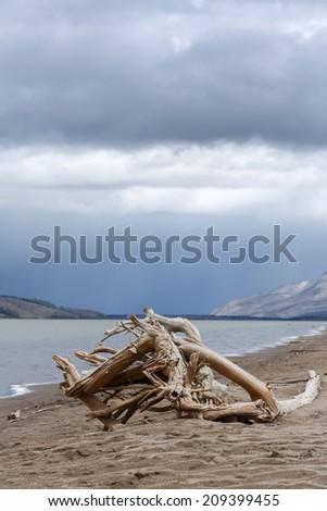 Driftwood at a Canadian lake - stock photo