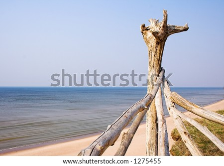 driftwood at beach - stock photo