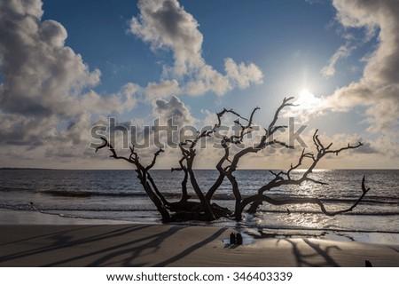 Driftwood Beach, Jekyll Island, Georgia - stock photo