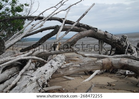 Driftwood in Cook Inlet - stock photo