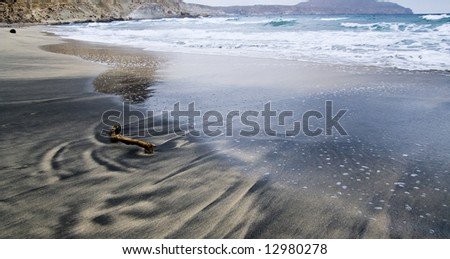 Driftwood in the sand in a volcanic beach - stock photo