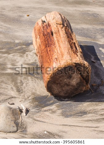 Driftwood is wood that has been washed onto a shore or beach of a sea, lake, or river by the action of winds, tides or waves. It is a form of marine debris or tidewrack. - stock photo