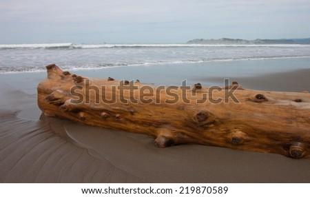 driftwood log on a New Zealand beach  - stock photo