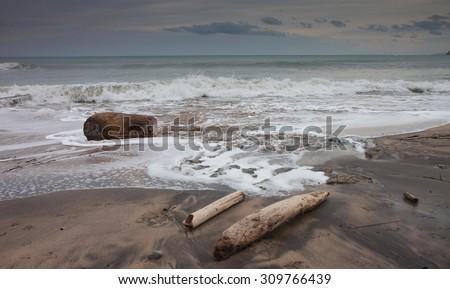 Driftwood logs on Turihaua Beach, Gisborne, East Coast, North Island, New Zealand  - stock photo