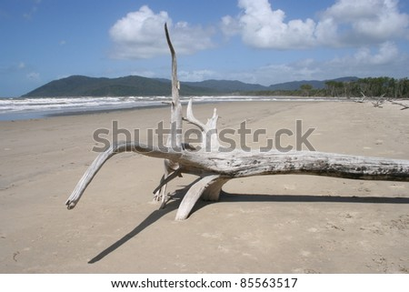 Driftwood on a beach in Northern Queensland Australia - stock photo